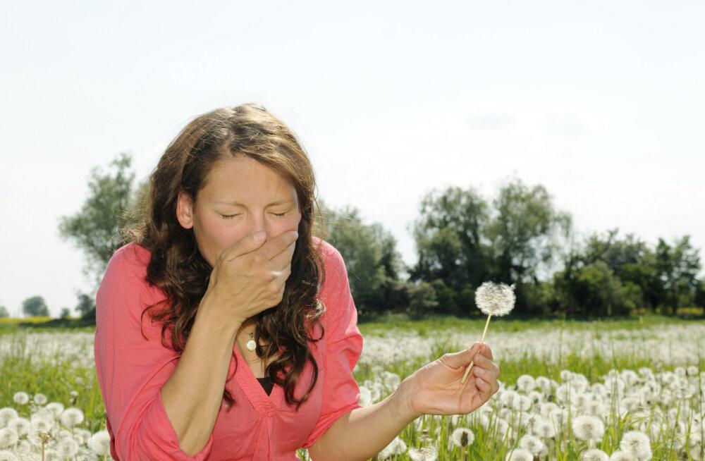 Mida teha siis, kui allergia näitab hambaid?