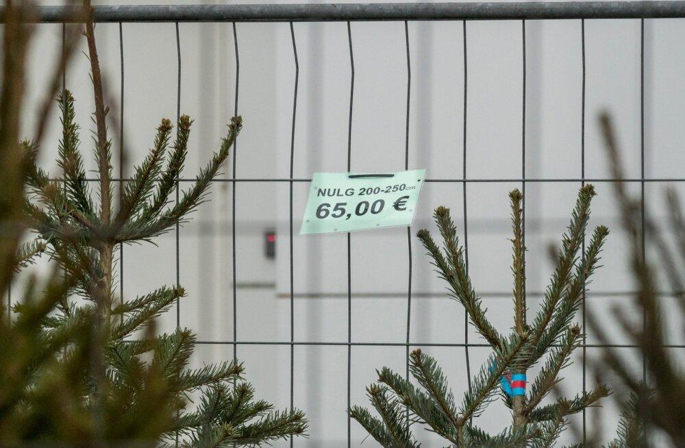 Kuusemüüjad jõulu eel