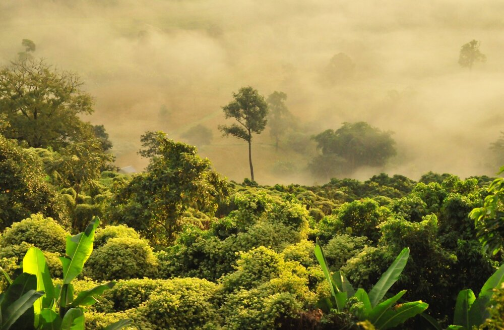 Siber: kas 60 aasta pärast paradiis?