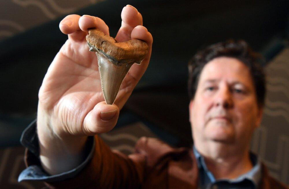 Austraalia rannast leiti iidse megahai vägevad hambad