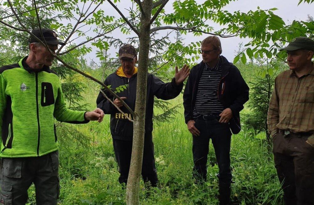 Urmas Orusalu (keskel) on oma aia piiril oleva metsa serva istutanud ka mõned pähklipuud. Tema tegemistega tutvuvad Tiit Kosenkranius (vasakul) ja Lauri Salumäe (paremal)