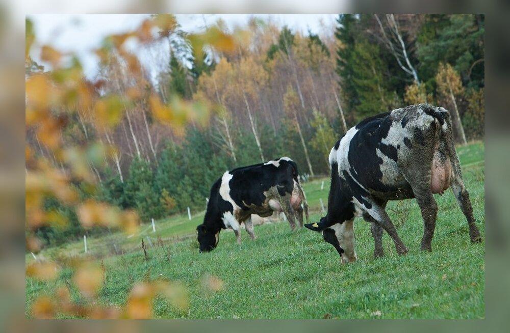 Swedbank kaebab Väätsa Agro saneerimiskava kinnitamise edasi