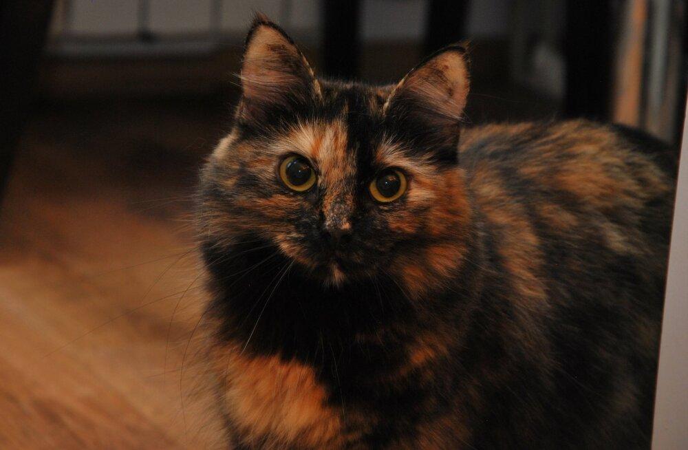 Kassijaama kassilood: eriline Henne otsib erilist kodu