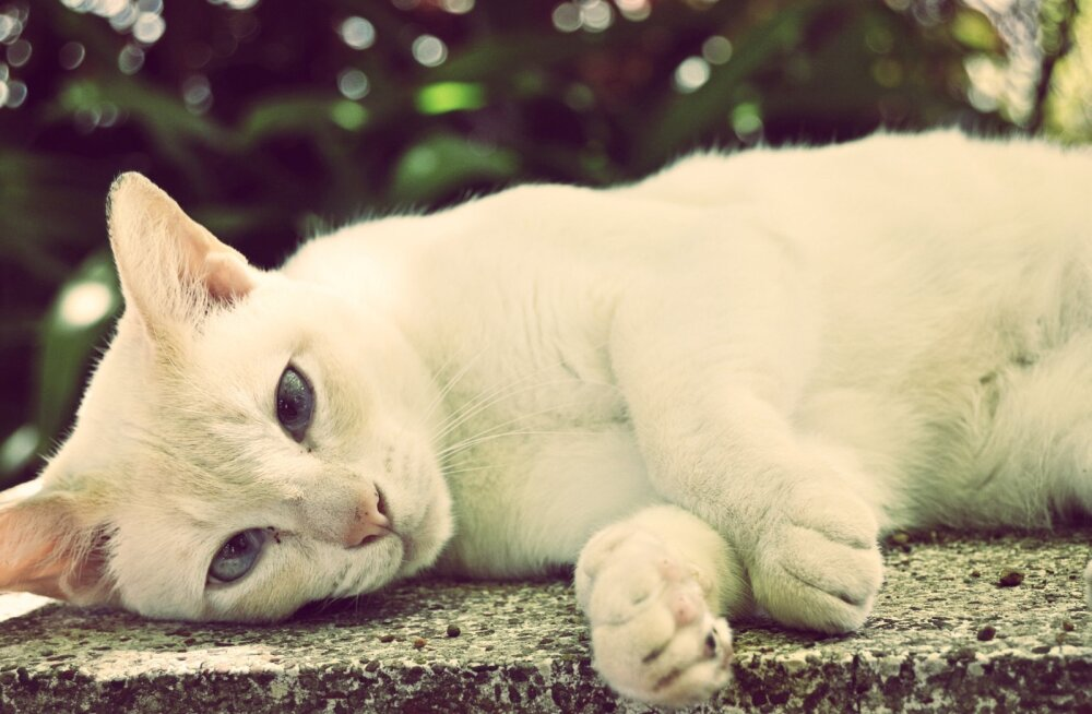 Lihtsad põhitõed, kuidas oma eaka kassi eest parimal viisil hoolt kanda