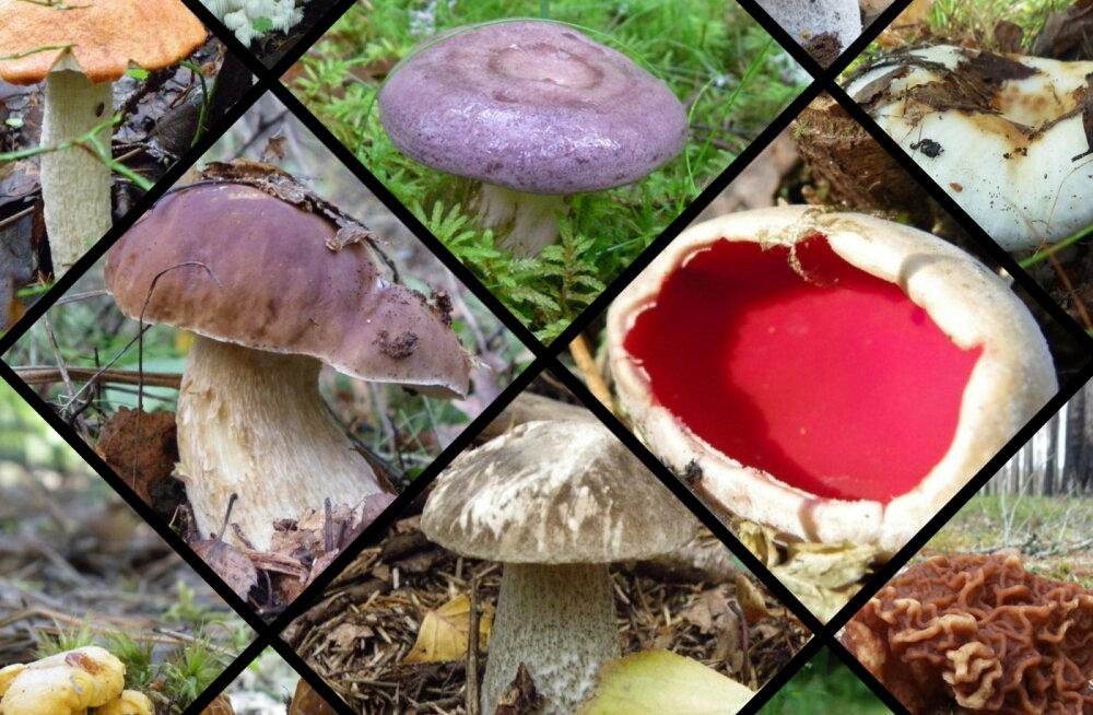 2019. aasta seenehooaja ülevaade | Seeneniidistiku tegevust mõistusega ette ei aima