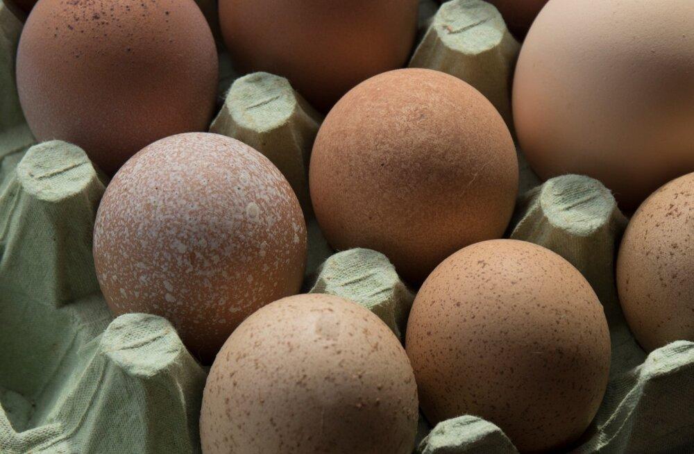 Осторожно, сальмонелла! Из продажи изъяты яйца пяти известных марок