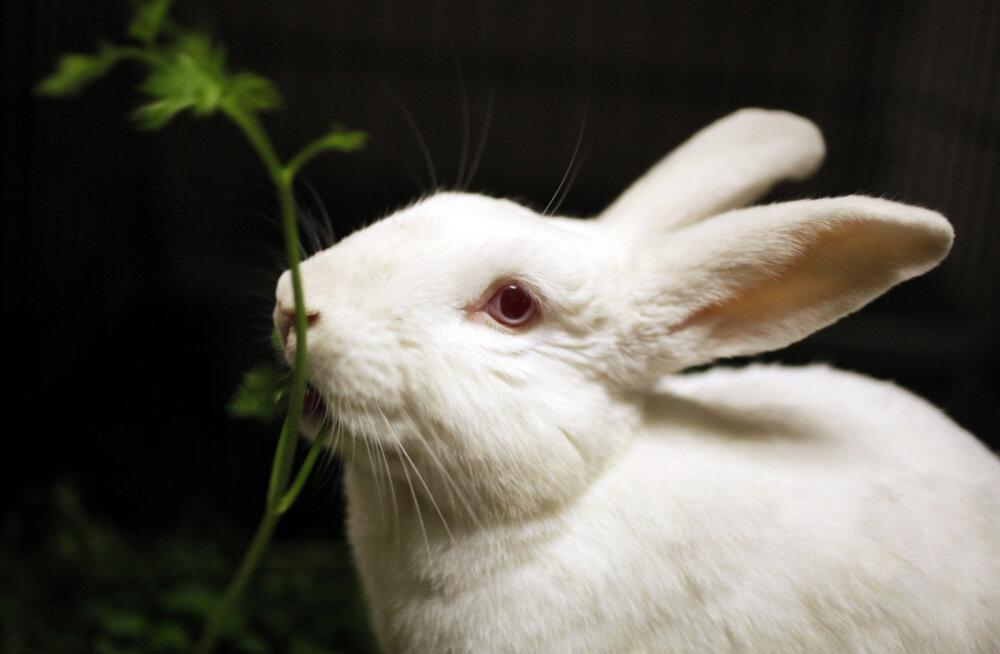 Küülik ja teised lemmikloomad: kuidas küülikut loomadega sobitada?