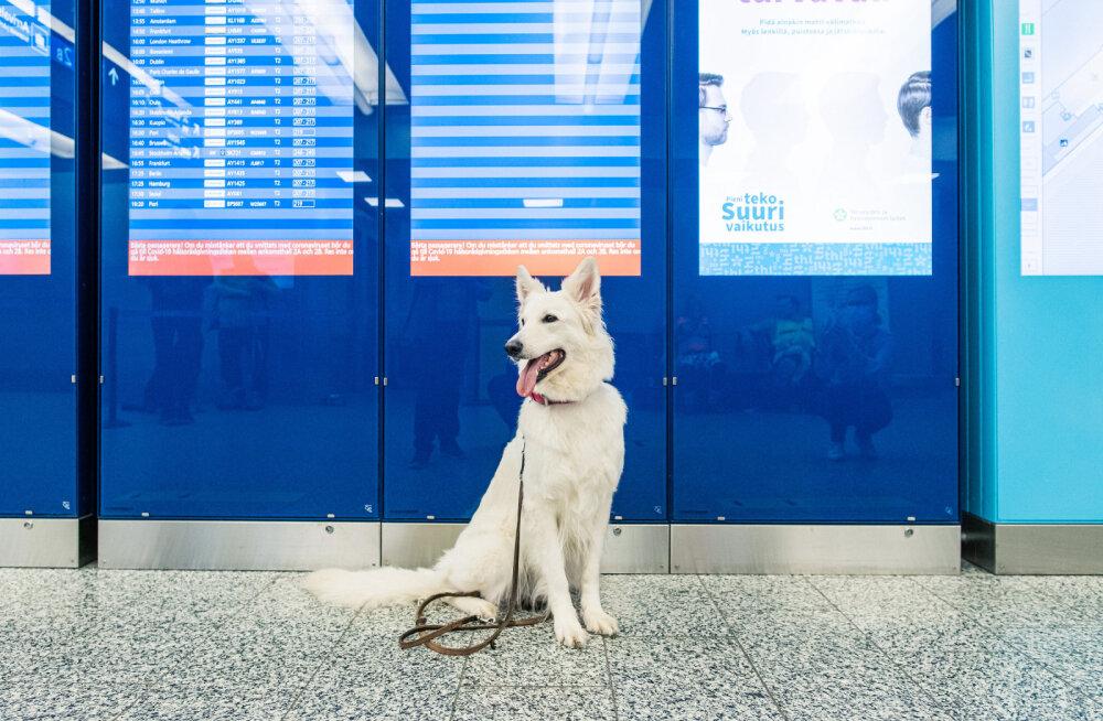 Koerad tuvastavad lennujaamas koroonaviirust.