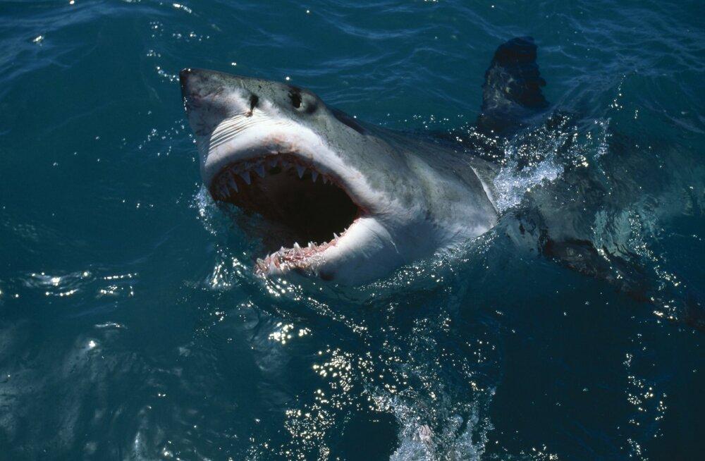 """А вы любите """"Челюсти""""? Завтра в Таллинне пройдет демонстрация в защиту акул"""