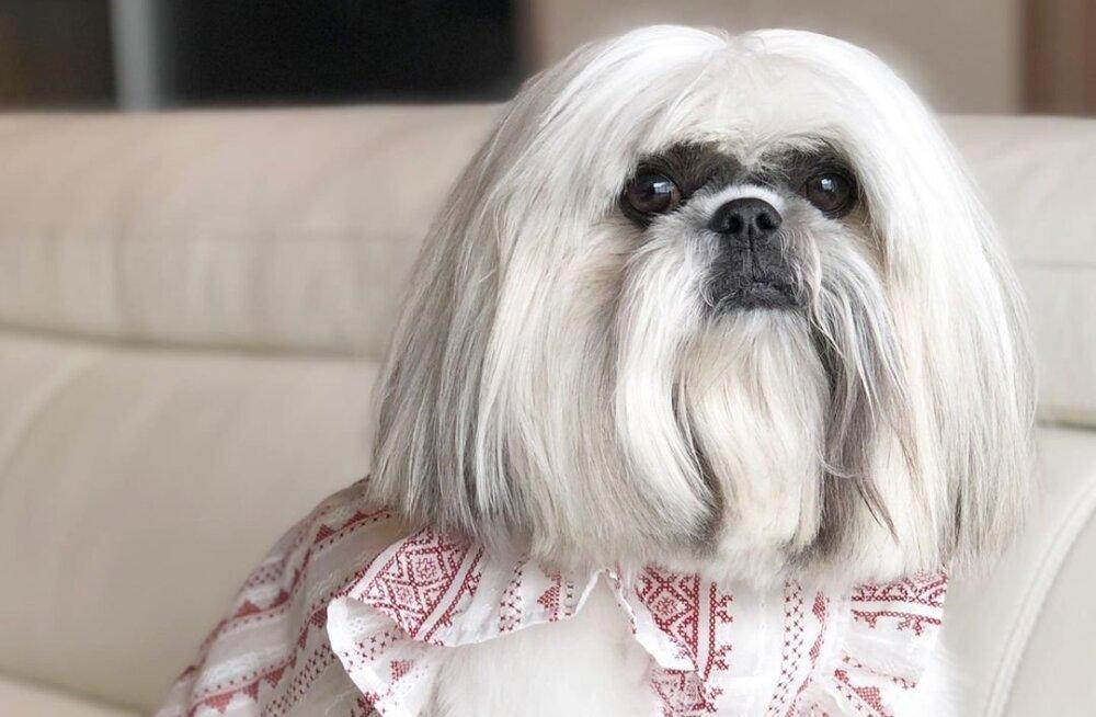 ФОТО | Новая звезда Интернета — собака, похожая на Леди Гагу