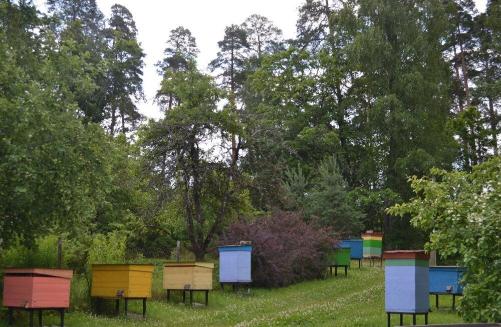 Metsamesinik Ülo aed