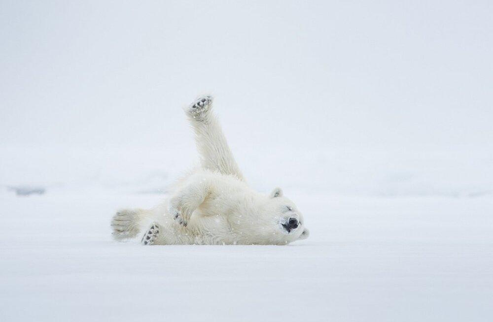 GALERII: Vaata Eesti loodusfotograafide parimaid pilte maailma loodusest!