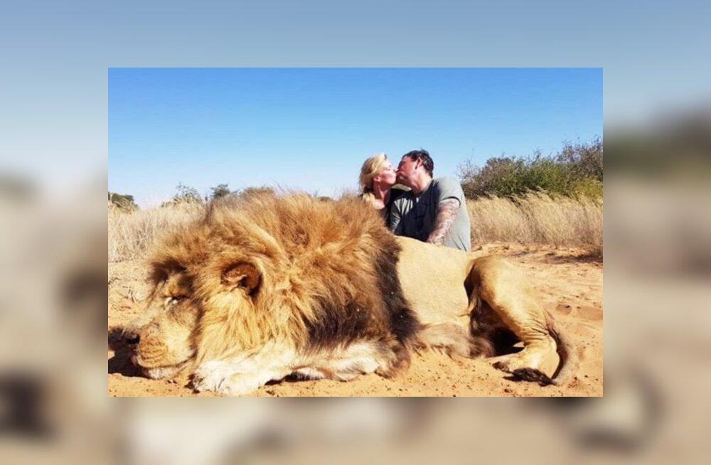 Nõrganärvilistele mittesoovitatav! Kanada paarike ameleb fotol enda tapetud lõvi kõrval
