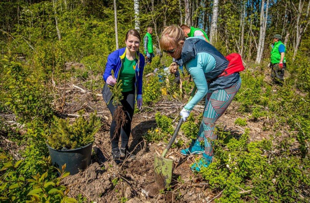RMK metsaistutustalgud
