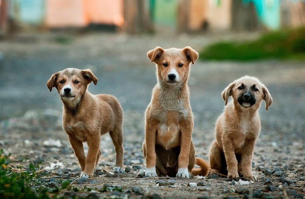 Väike koer: peamised murekohad ja kuidas neid lahendada
