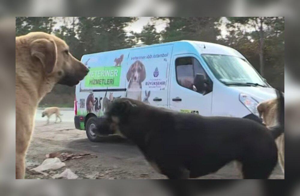 VIDEO | Istanbulis sõidab ringi ratastel loomakliinik, mis aitab kodutuid koeri ja kasse