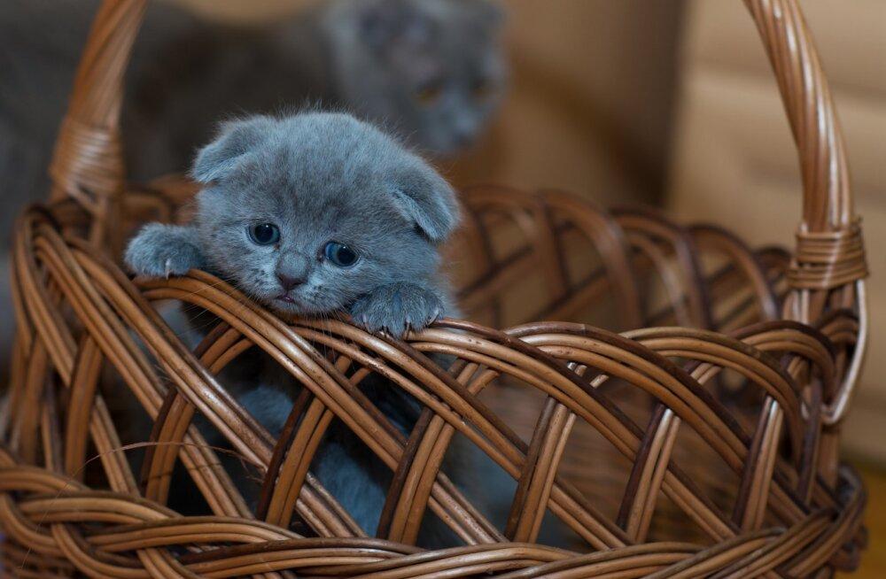Tipp ja Täpp: tühjast laudast päästetud imepisikesed kassipojad vajavad abi, et avada oma silmad
