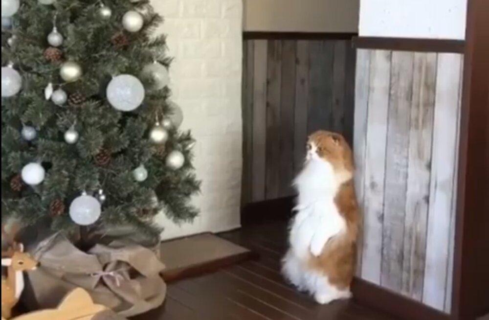 Naljakas VIDEO | Kassi reaktsioon tuppa ilmunud jõulukuuse peale on fantastiline!