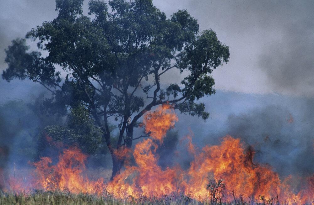 Amazonase vihmametsad ehk meie koduplaneedi kopsud põlevad