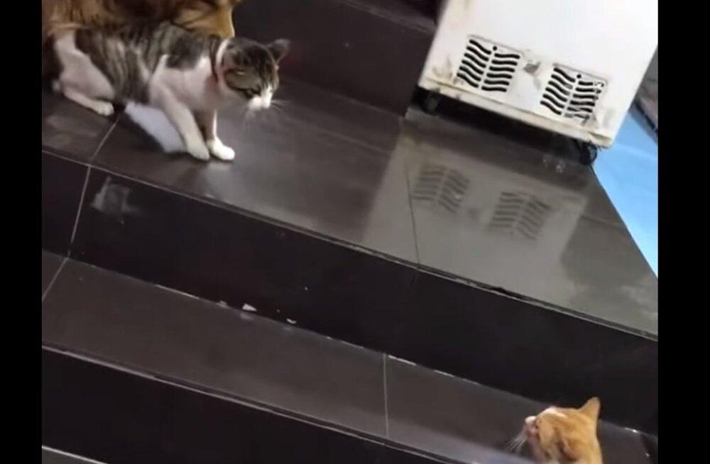 Fantastiline reaktsioon: vaata, kuidas rahusobitajast koer kassi keset kaklust minema tirib!