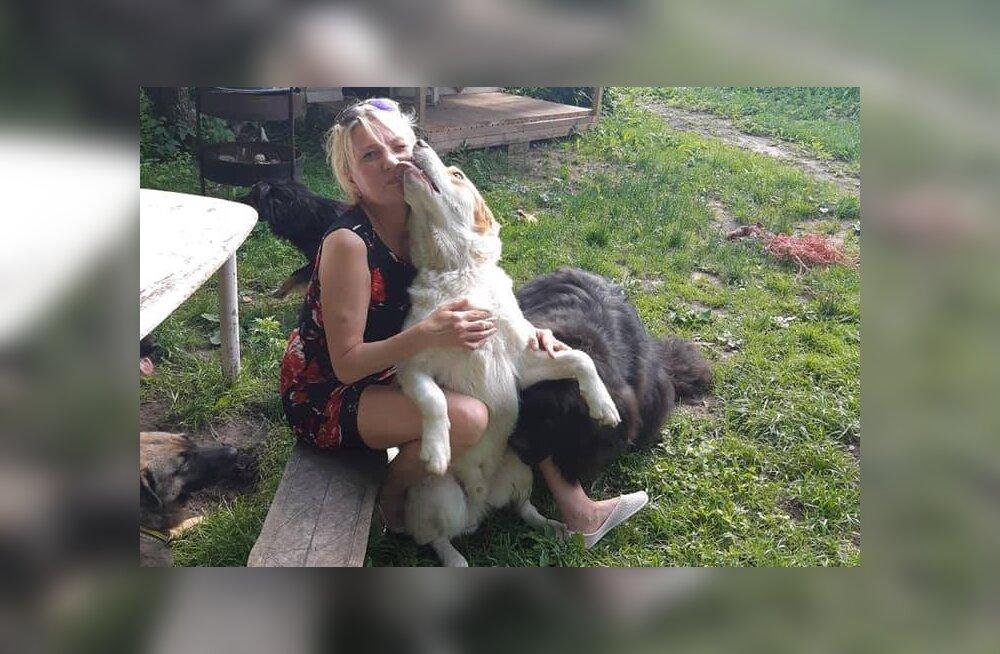FOTOD JA VIDEO | Vigaseks pekstud, surmasüstile määratud ja doonoritena kasutatud: Pärnumaa naise kodus leiavad peavarju needki koerad, keda varjupaigad ei taha
