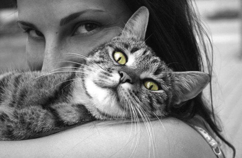 6 asja, mida me teeme, aga mida kassid silmaotsaski ei salli
