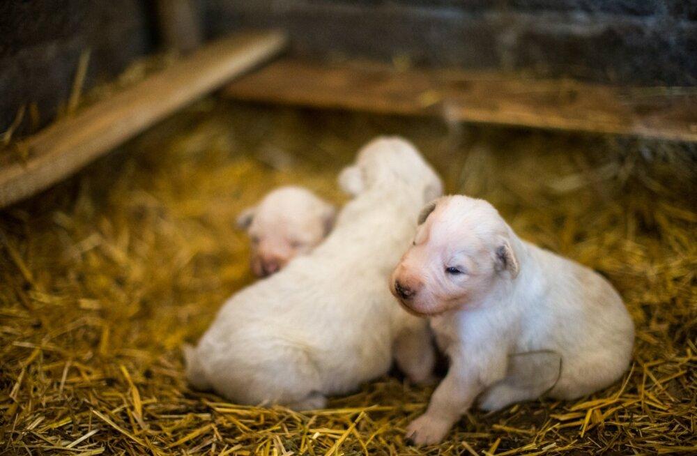Loomakaitsjad: kaebeõiguse puudumise tõttu jäävad loomapiinajad enamasti kriminaalkorras karistamata