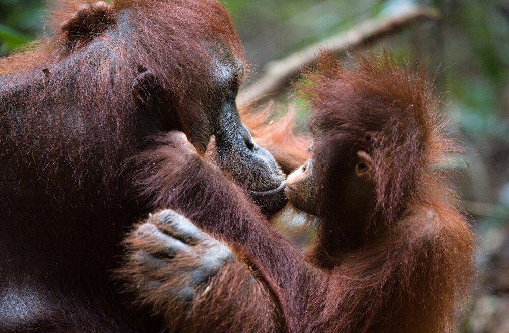 Uuring: inimkond moodustab vaid 0,01% kõigist elusolenditest, aga on hävitanud 83% kõigist imetajatest