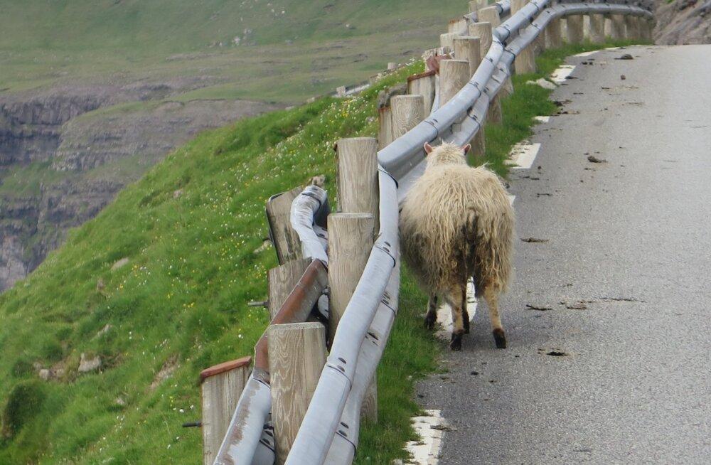 Maalehe reisiseltskond imetles Fääri saarte loodusvaateid.