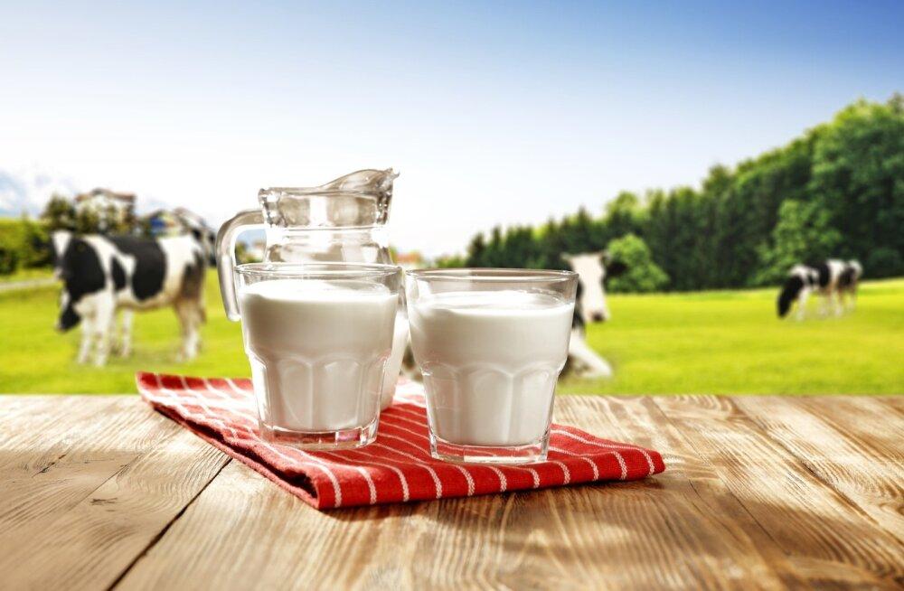 Maapiima rasvasisaldus võib olla erinev, sest seda ei ole piimatööstuses muudetud.