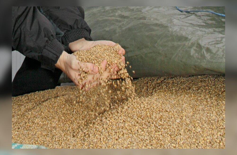 Seemnete sertifitseerimise ja sordikaitse riigilõivud muutusid kulupõhiseks