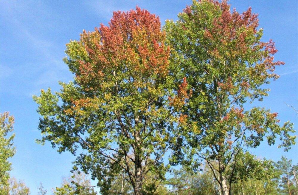 Leili metsalood | Värvilised puud