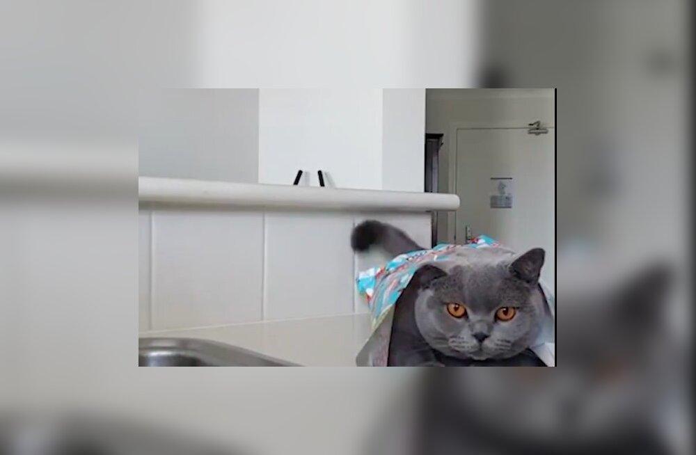 VIDEO | Kingitused pole piisavad? Vaata, kuidas naine pakib kassi ära