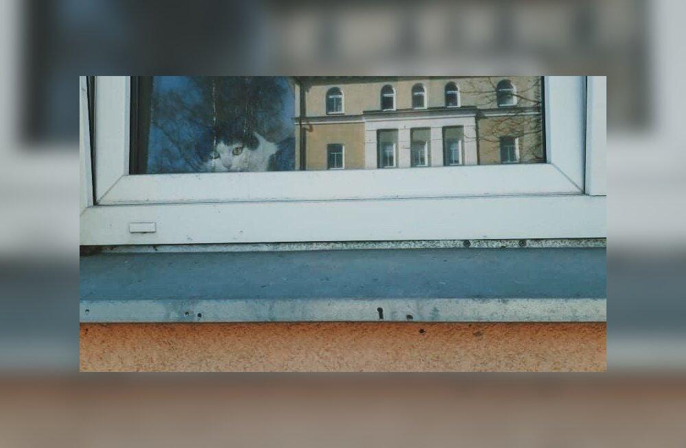 Полицейские спасли закрытую в квартире кошку. Ее хозяина госпитализировали