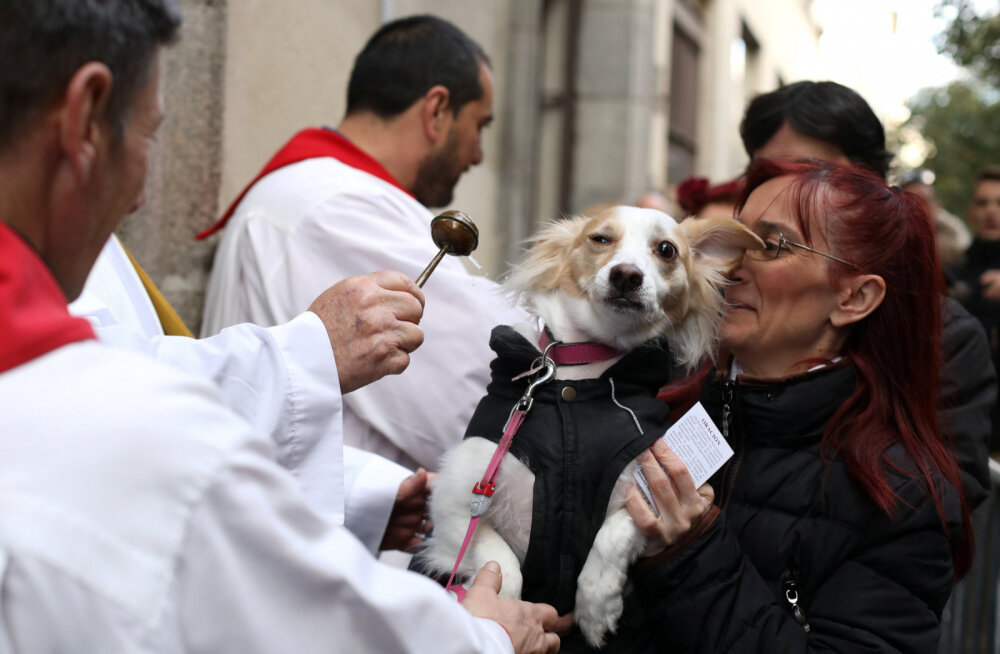 ФОТО и ВИДЕО | Боже, благослови собачек! Зачем сотни испанцев пришли в церковь со своими питомцами?