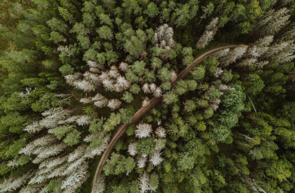 Üraskikahjustused Karula rahvuspargis