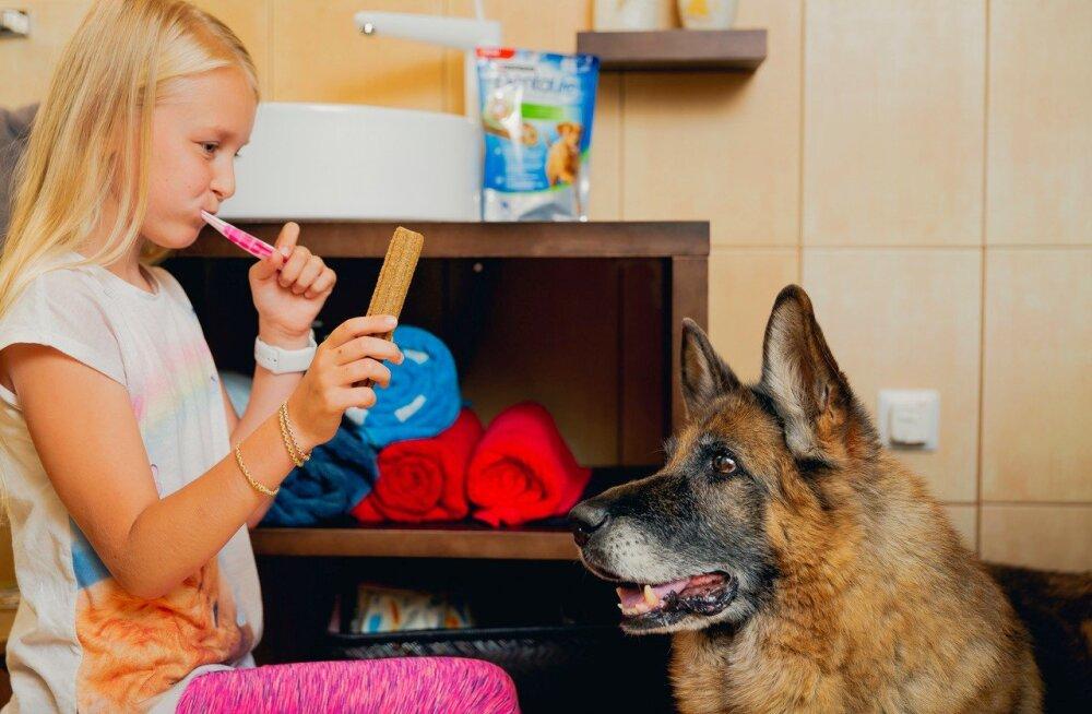 Laupäeval püstitatakse Eestis koerte hambapesurekord