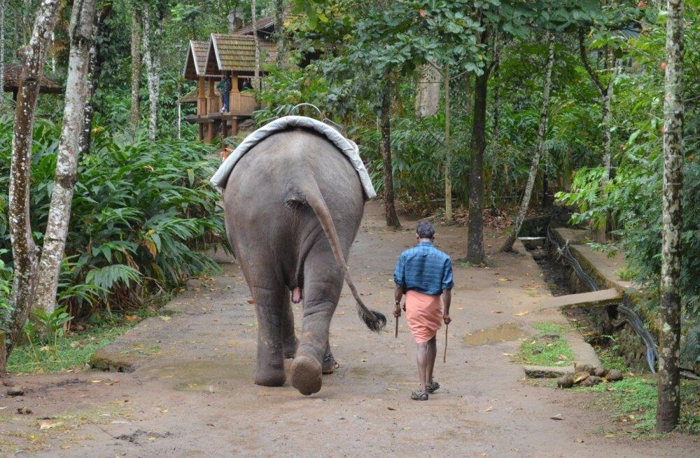 ui väike, nõrk ja tühine tundub üks inimloom elevandi kõrval.
