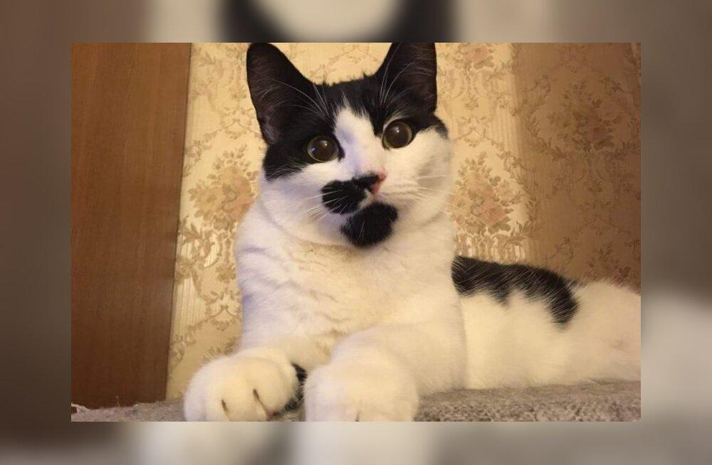 Tirtsu lugu | saa tuttavaks kõige pesuehtsema ja ägedama kassiga, keda sa näinud oled