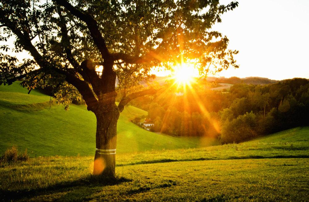 10 sügavat tarkust teadjanaiselt Mai-Agate Väljatagalt
