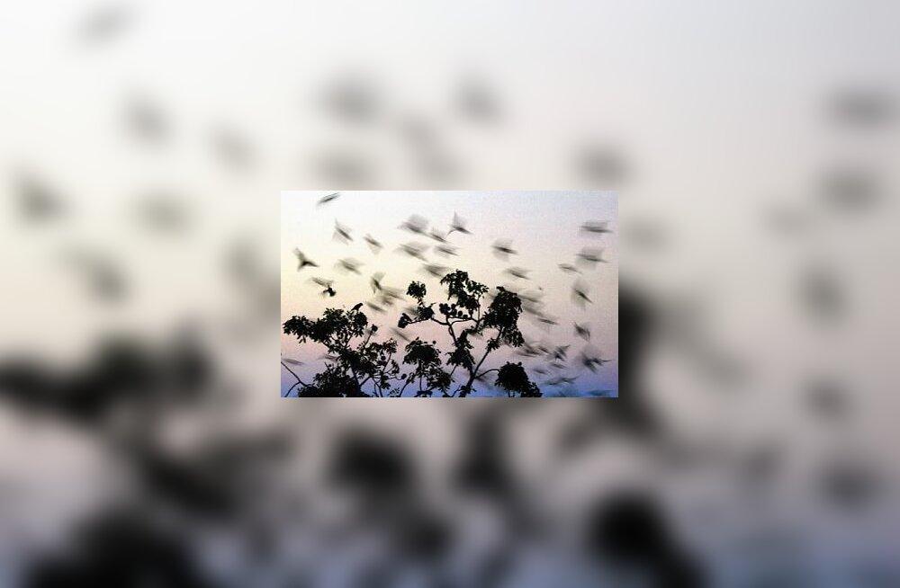 Linnud, loodus, sp5206c8