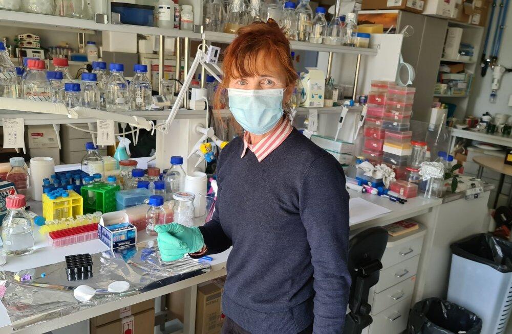 EKSKLUSIIVSED FOTOD | Koroonateadlaste köögipool – siin tehaksegi viiruse antikehade teste