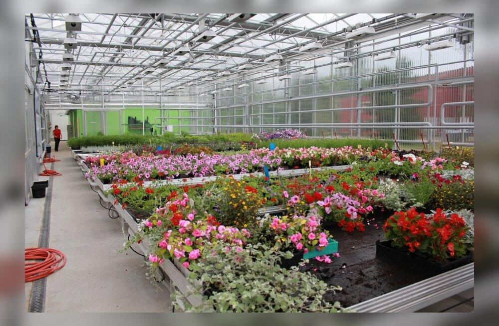 FOTOD: Räpina Aianduskooli kasvuhoonekompleks on Eestis unikaalne