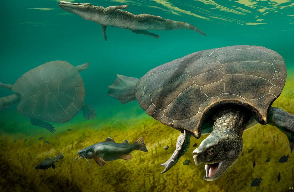 Maal elutses kunagi autosuurune sarviline kilpkonn, kellel oli ka võrdväärne vaenlane