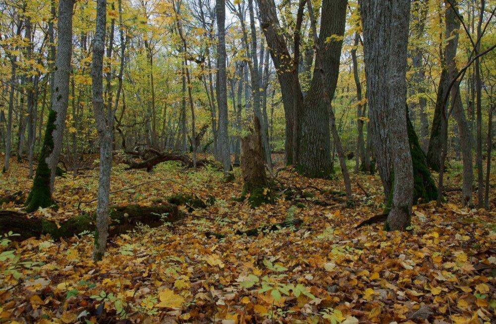 Ajalooliselt kasvasid salumetsades valdavalt laialehised puud. Majandamise tulemusena koosnevad need metsatüübid praegu enamasti kase- ja kuusepuistutest. Eesmärk on pärnad ja jalakad neisse metsatüüpidesse tagasi meelitada.