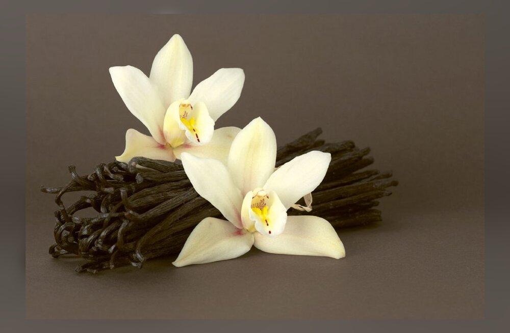 Orhideeperekonnast pärit vanill