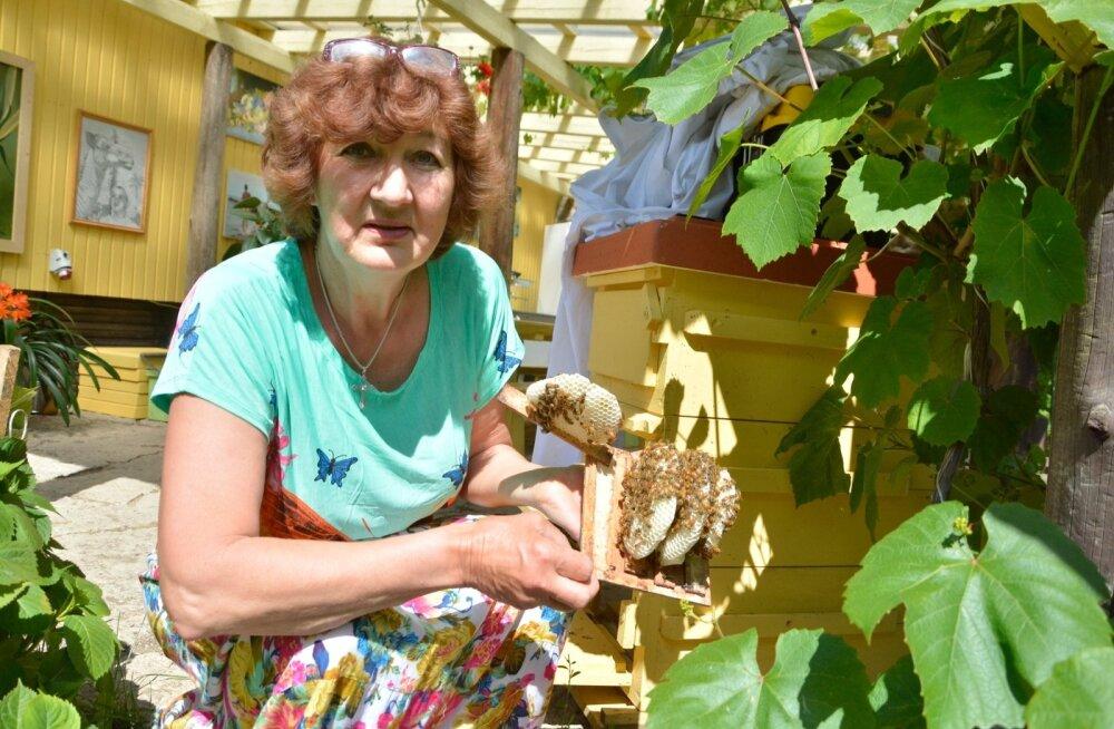 Maire Valtin oma mesilas pärast mesilaste massilist hukkumist. Kahju ulatub üle 30 000 euro.