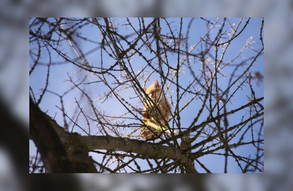 ФОТО: В Кохтла-Ярве кот вторые сутки сидит на дереве