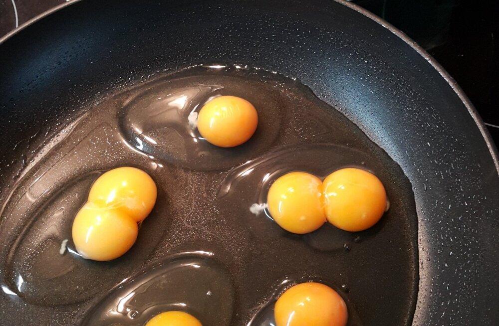 Kahe rebuga munad RImist