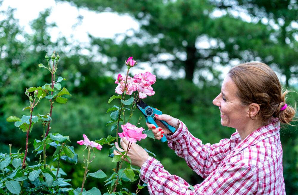SPETSIALIST SELGITAB   Kas õitsenud lillede õisikud tuleb tegelikult ka ära lõigata ja miks?